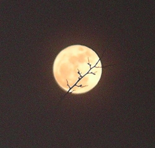 Super_moon_19th_mar_2011