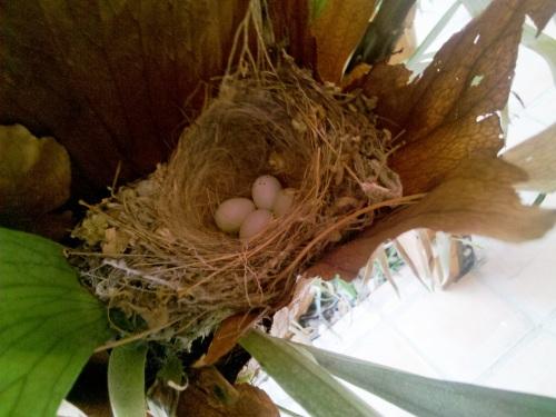 Baby_birds_part_2