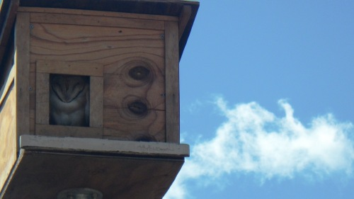 Owl_in_the_box